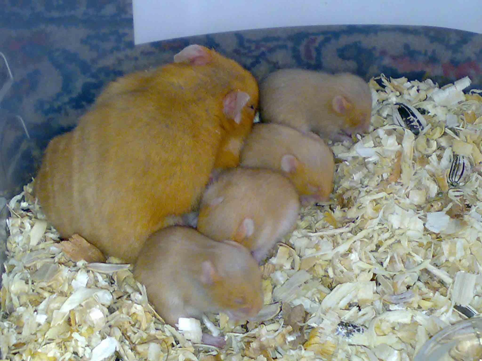 http://hamster.persiangig.com/image/144.jpg